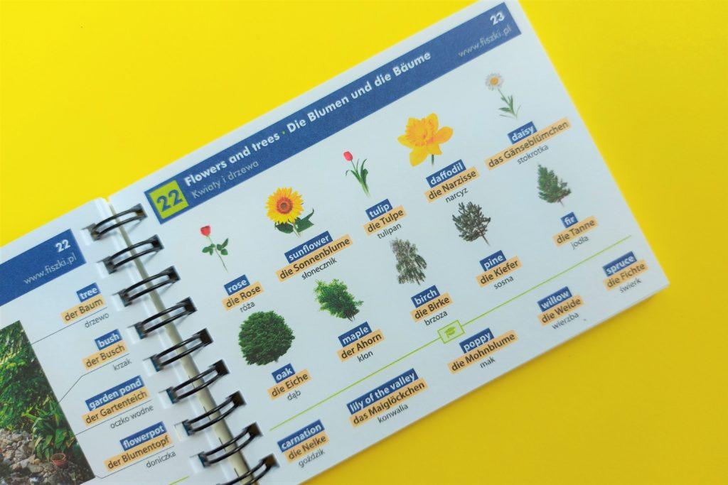 Słownik obrazkowy angielski + niemiecki - drzewa i kwiaty po angielsku i niemiecku