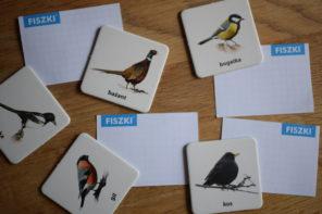 ptaki po angielsku
