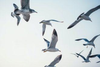 Ptaki po angielsku seaguls-mewy