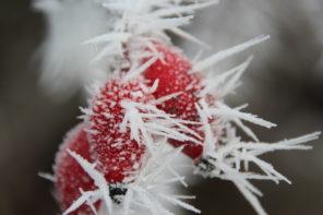 jak uczyć się słówek zimą