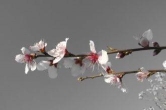 Gałązka z kwiatami